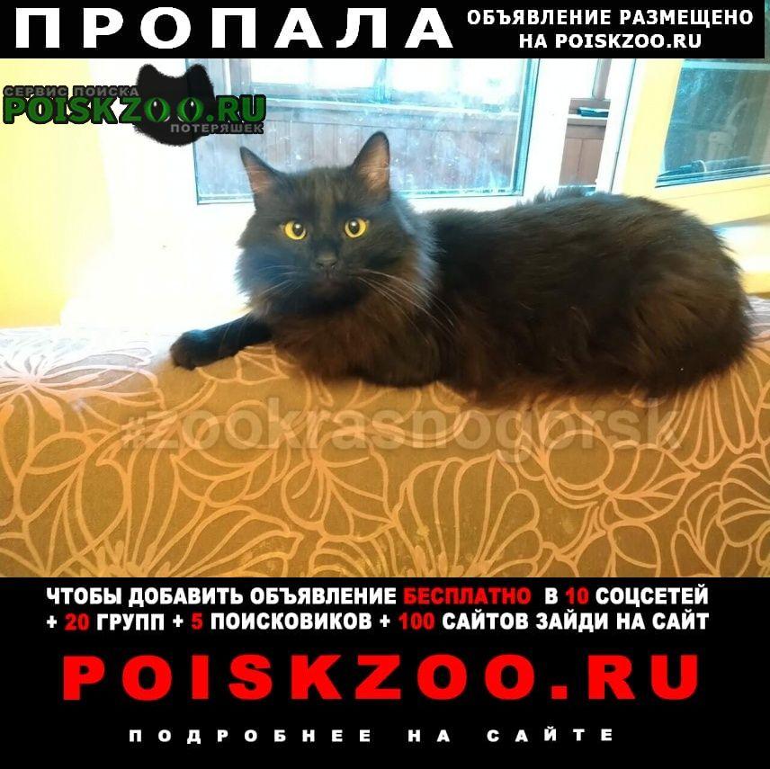Красногорск Пропала кошка