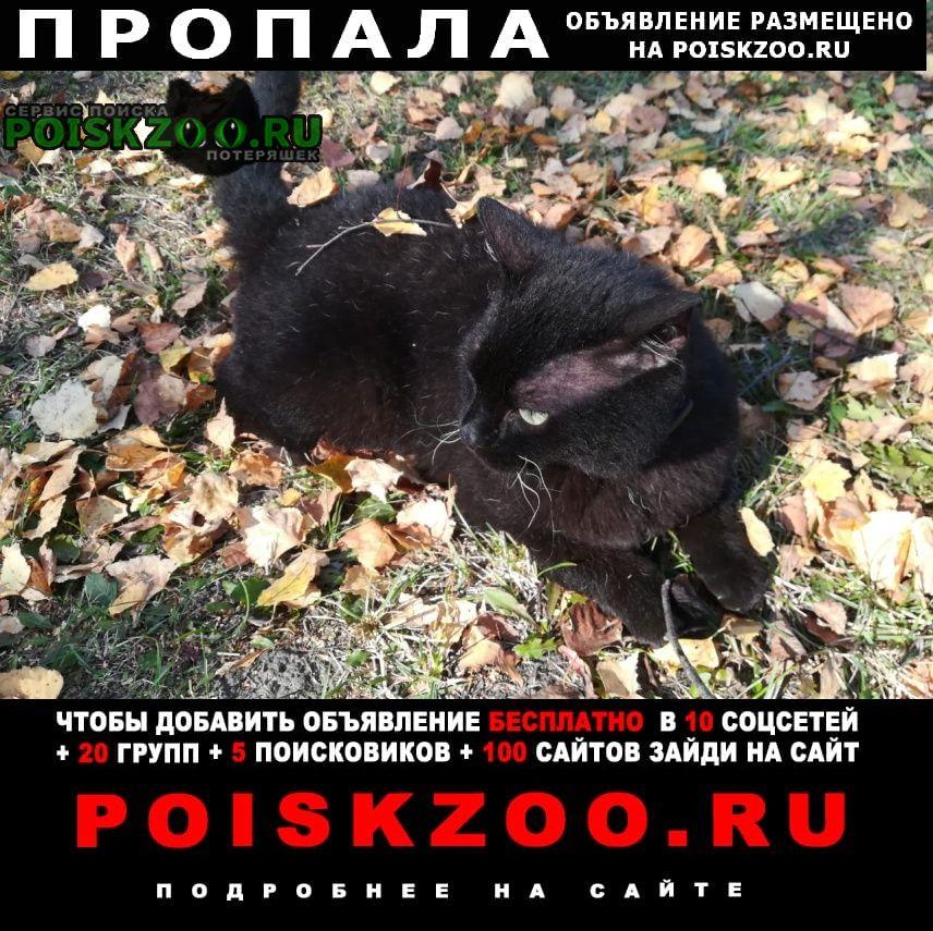 Пропала кошка хозяин ищет своего кота Томск