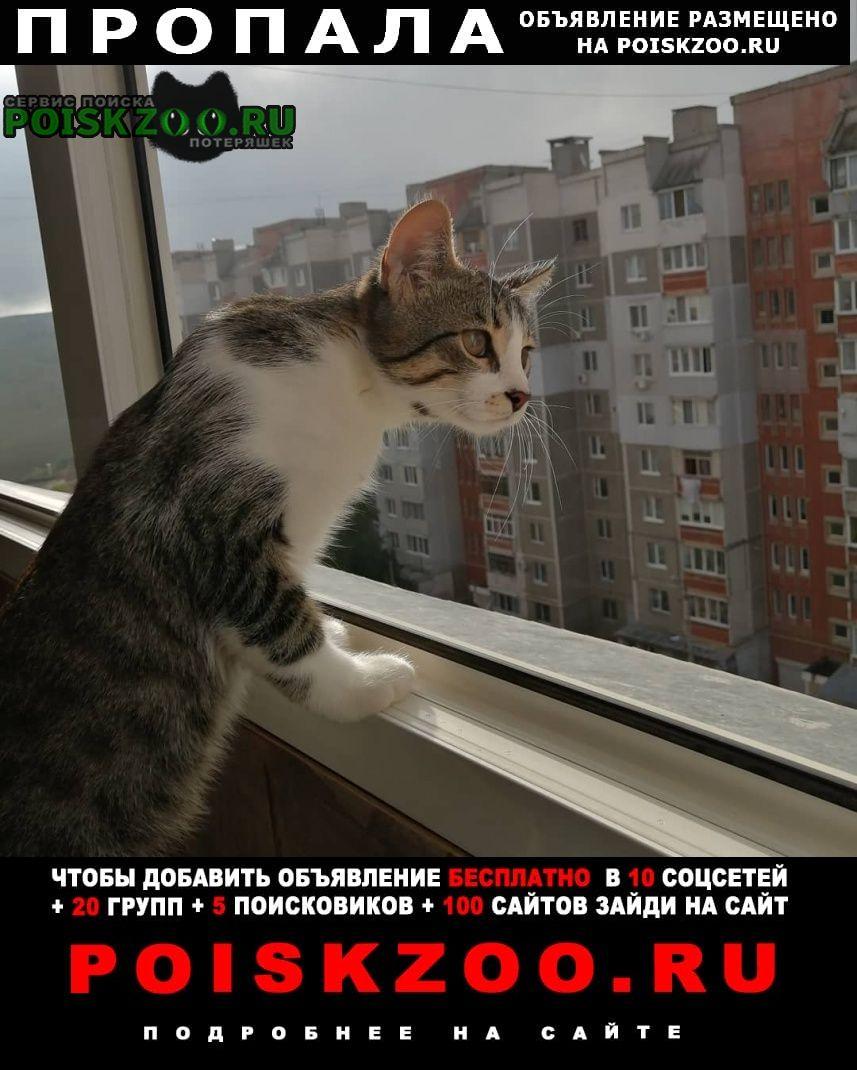 Пропала кошка кот, отзывается на алекс или кс. Симферополь