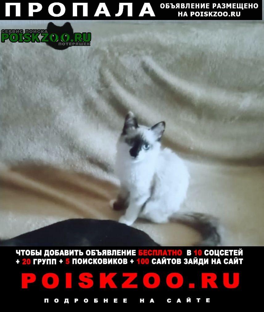 Пропала кошка 5 мес окрас колор пойнт Троицк Челябинская обл.
