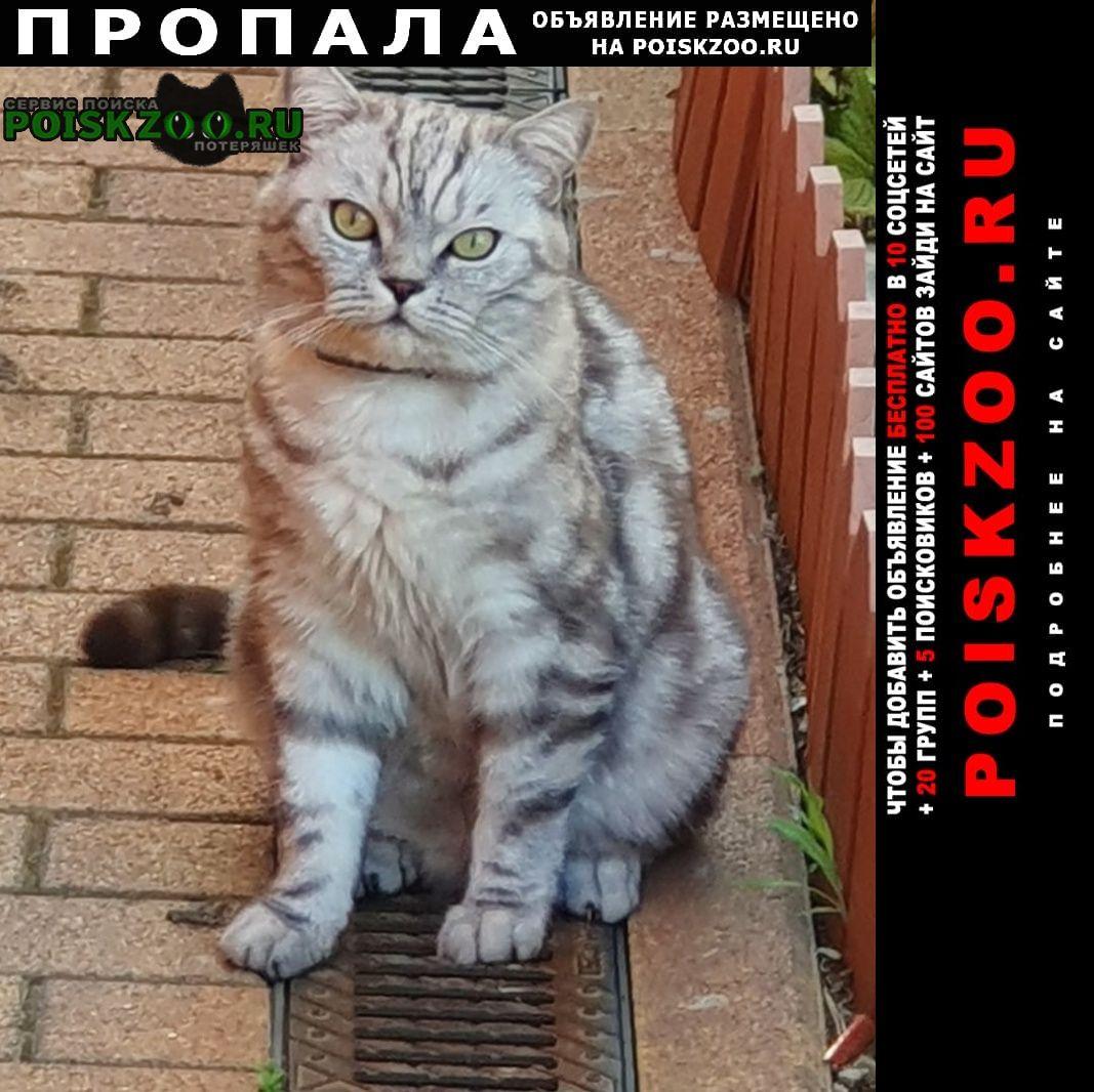 Пропала кошка шотландский кот вилли Пятигорск