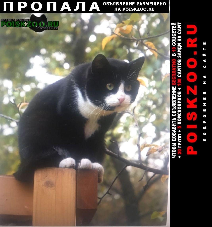 Видное Пропала кошка черный кот