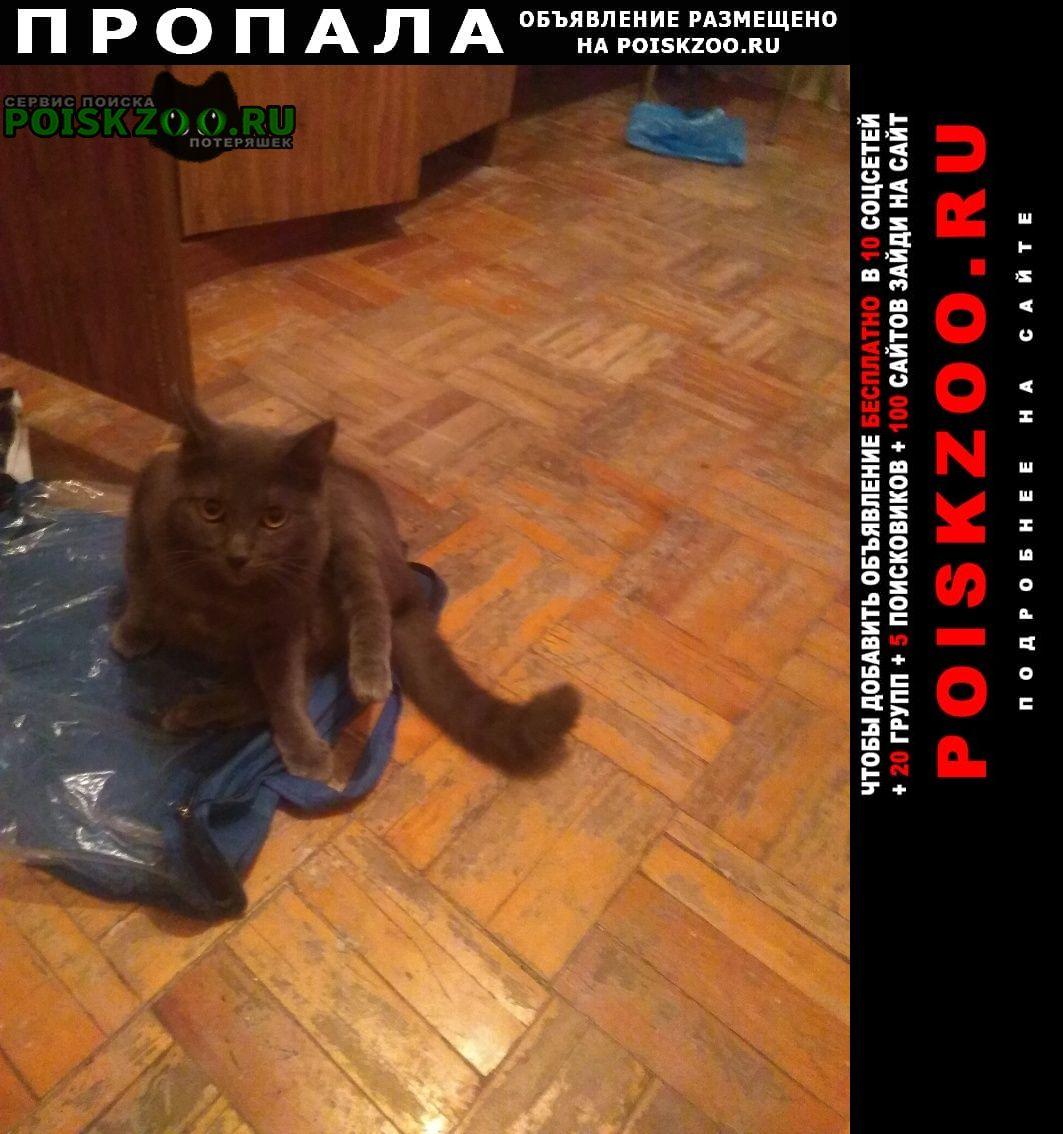 Краснодар Пропала кошка кот британец 2, 5 года серёга дубинка