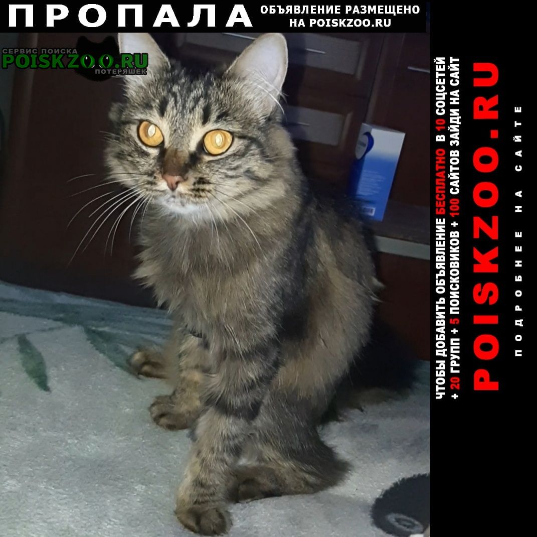 Ангарск Пропала кошка