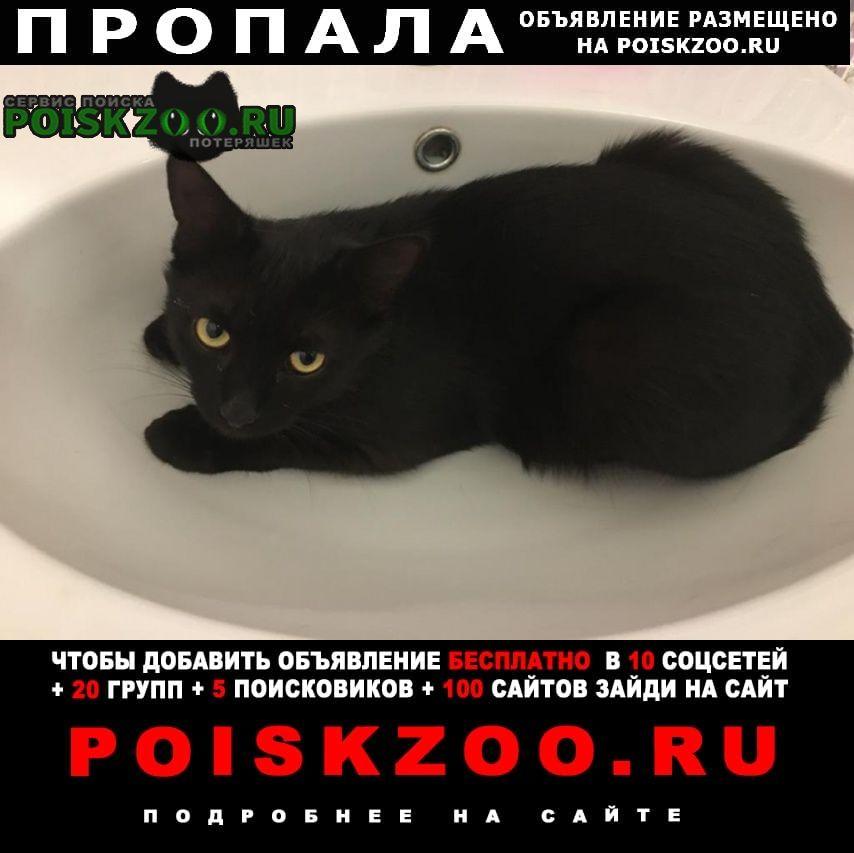 Пропала кошка кот по кличке «коко Ставрополь