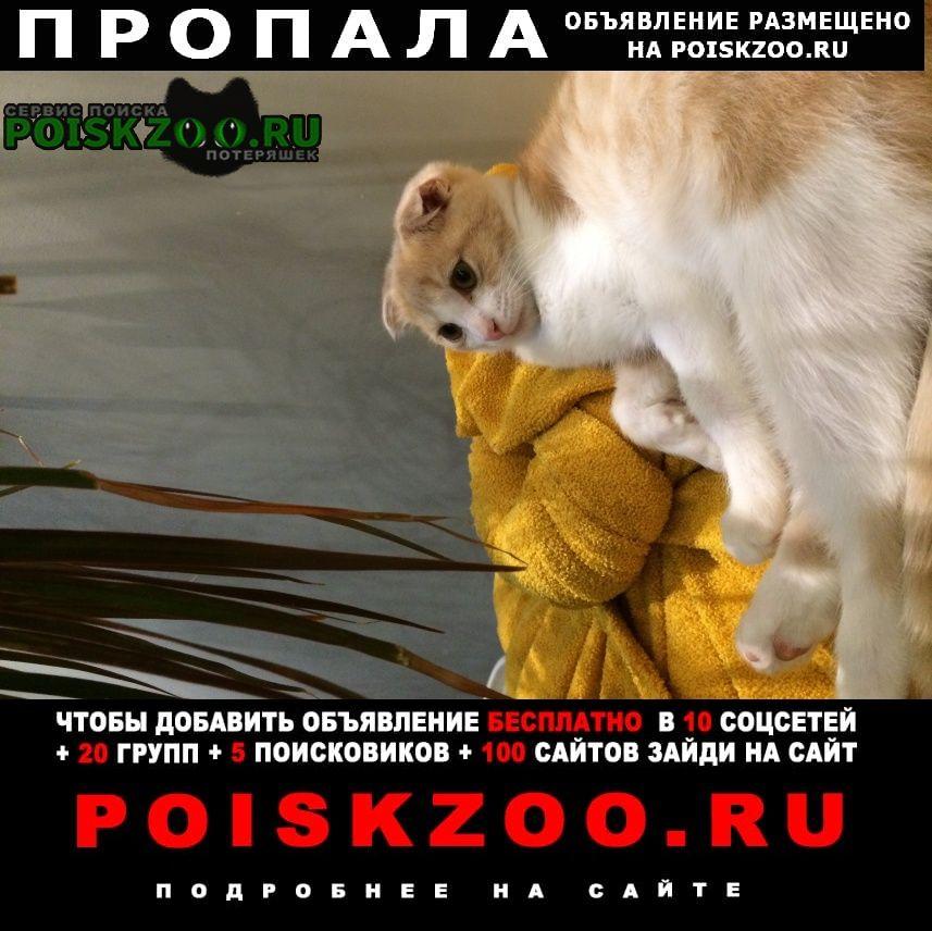Пропала кошка шотландская вислоухая Обнинск