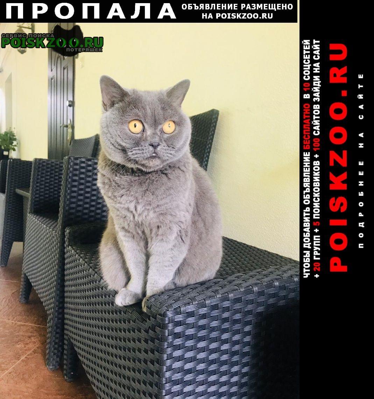 Пропала кошка Солнечногорск