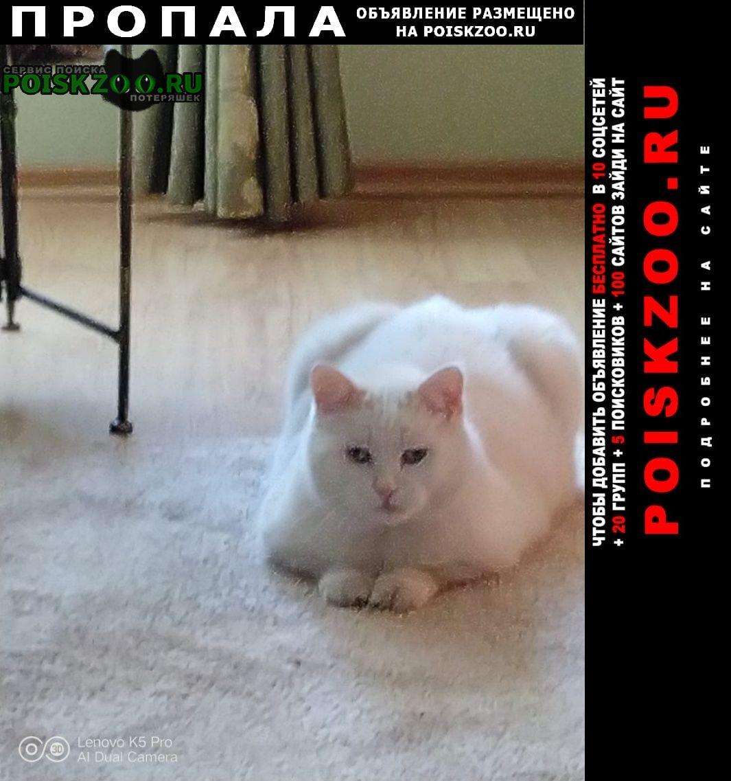 Барнаул Пропала кошка домашний белый кот