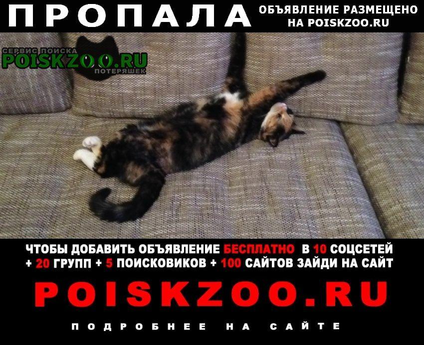 Москва Пропала кошка бутово парк