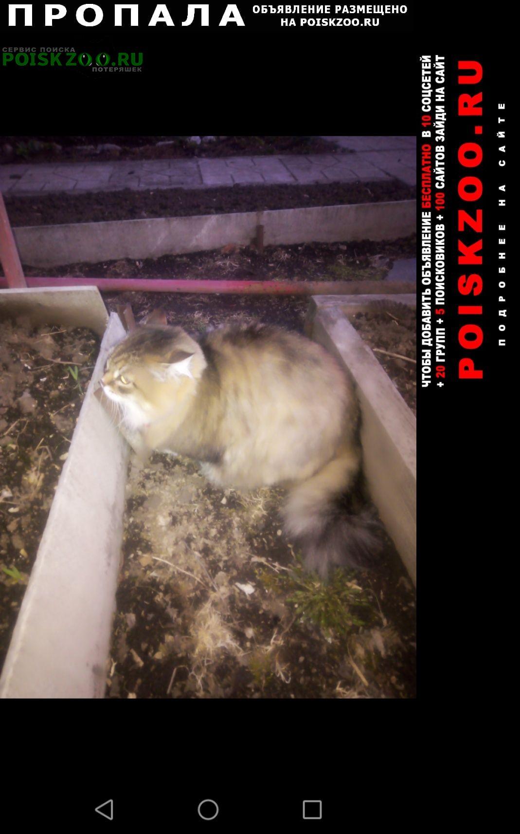 Пропала кошка кот Нижний Тагил