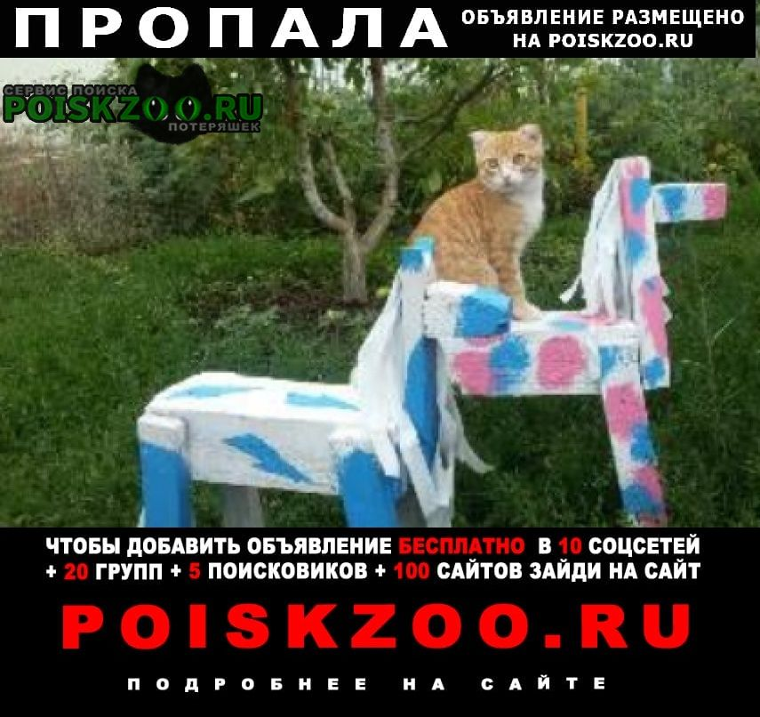 Пропала кошка рыжий кот веслоухий Самара