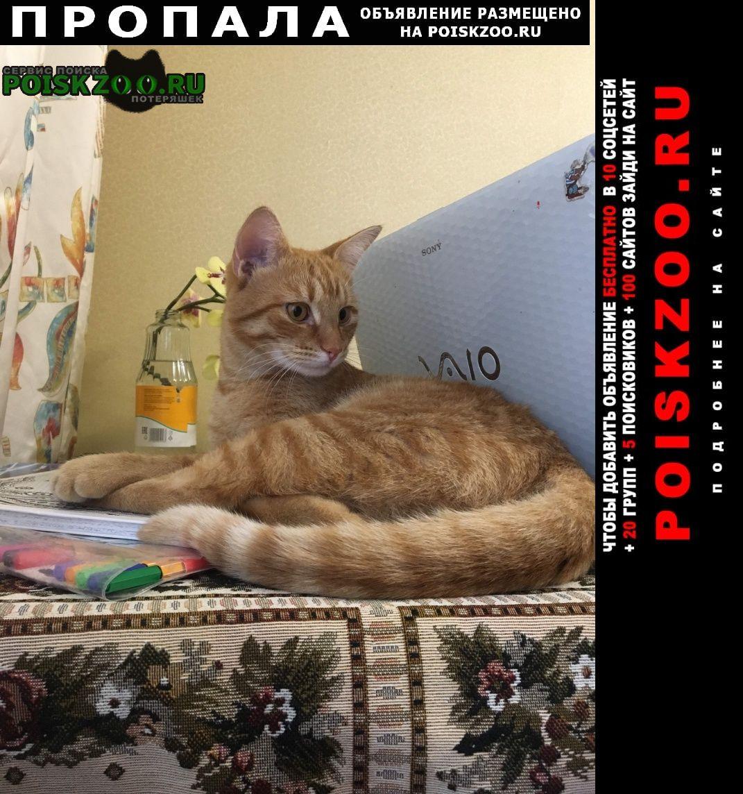 Пропала кошка рыжий кот Москва