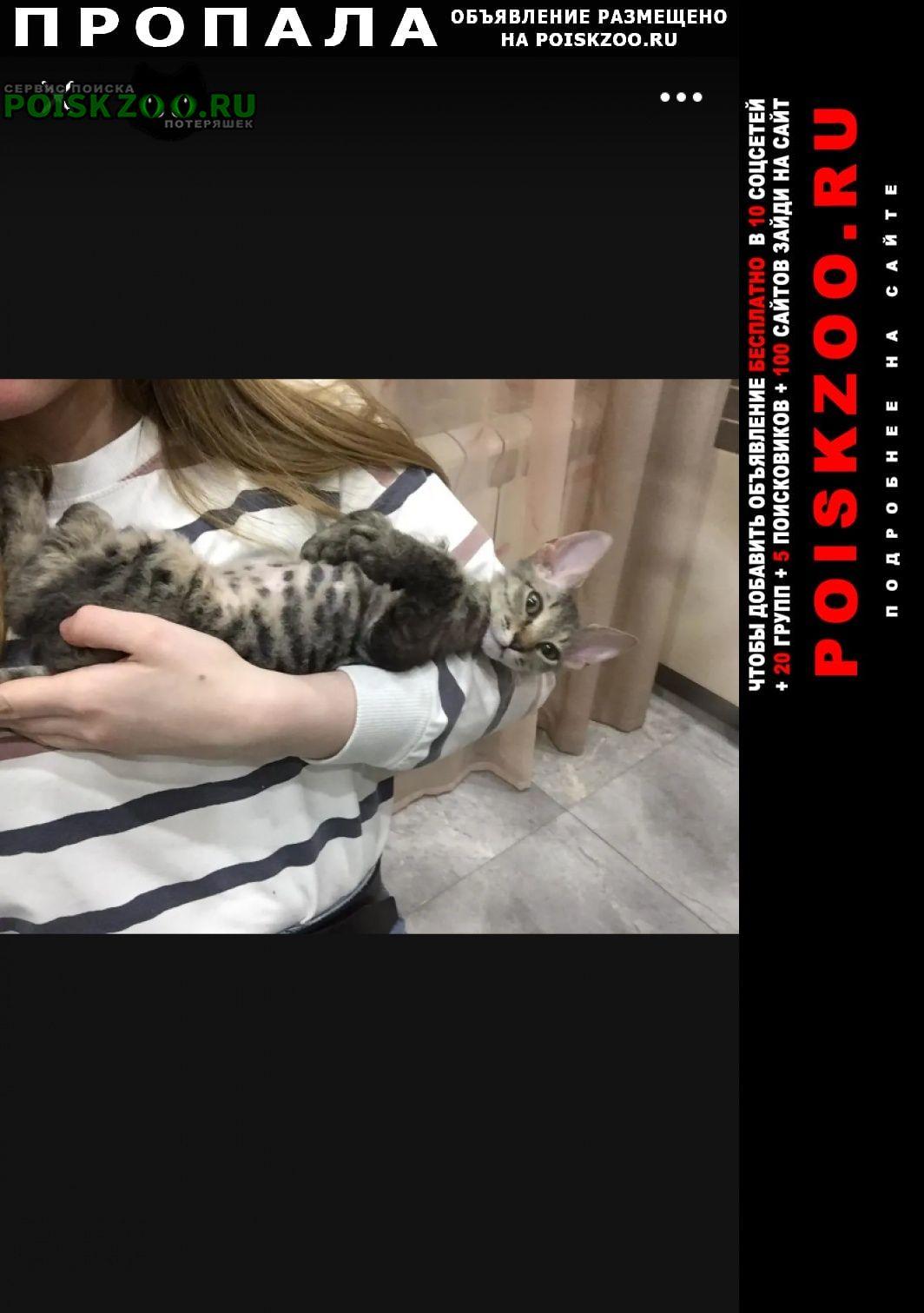 Пропала кошка кошечка 21 октября Москва
