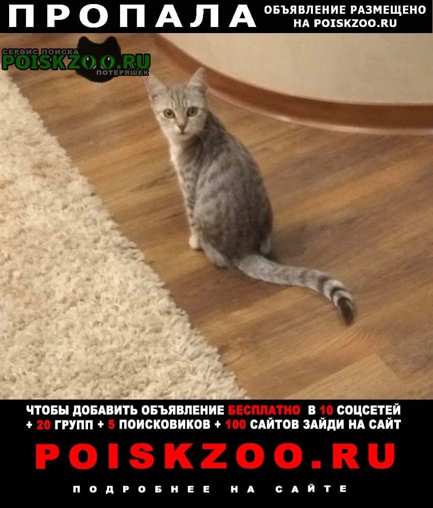Пропала кошка котенок Ставрополь