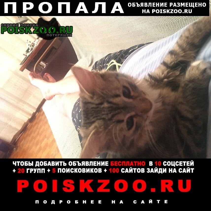 Пропала кошка пожалуйста помогите найти Балашиха
