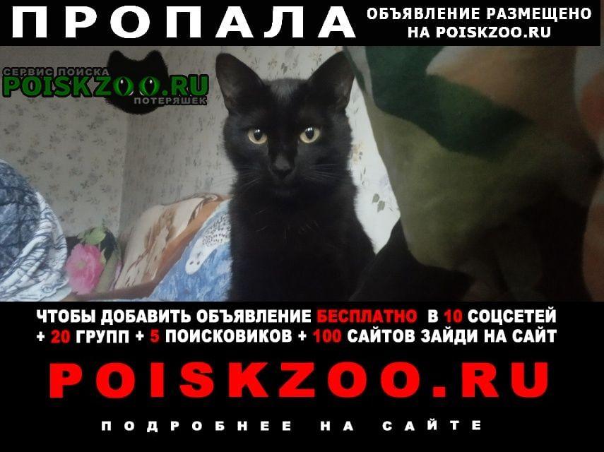 Пропала кошка q Ижевск