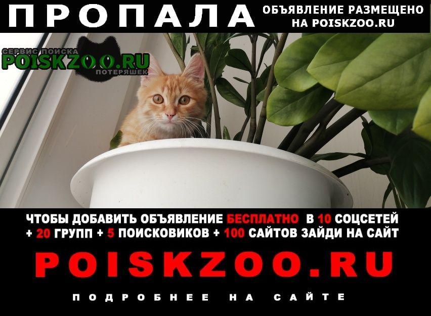 Пропала кошка котенок 3 месяца Химки