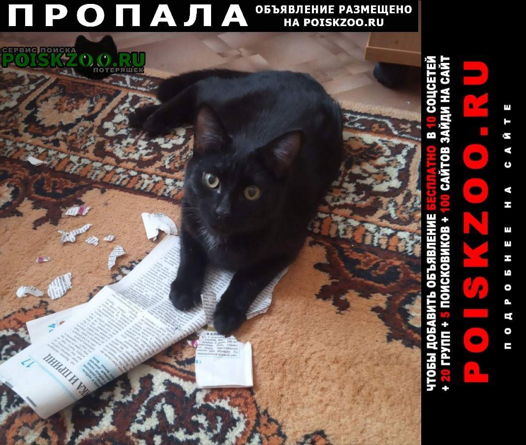 Пропала кошка помогите найти Новосибирск