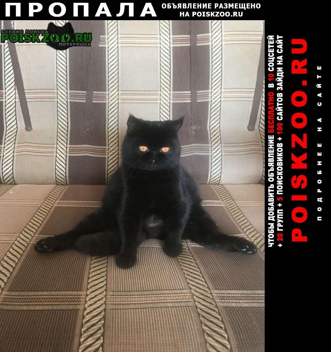 Балашов Пропала кошка