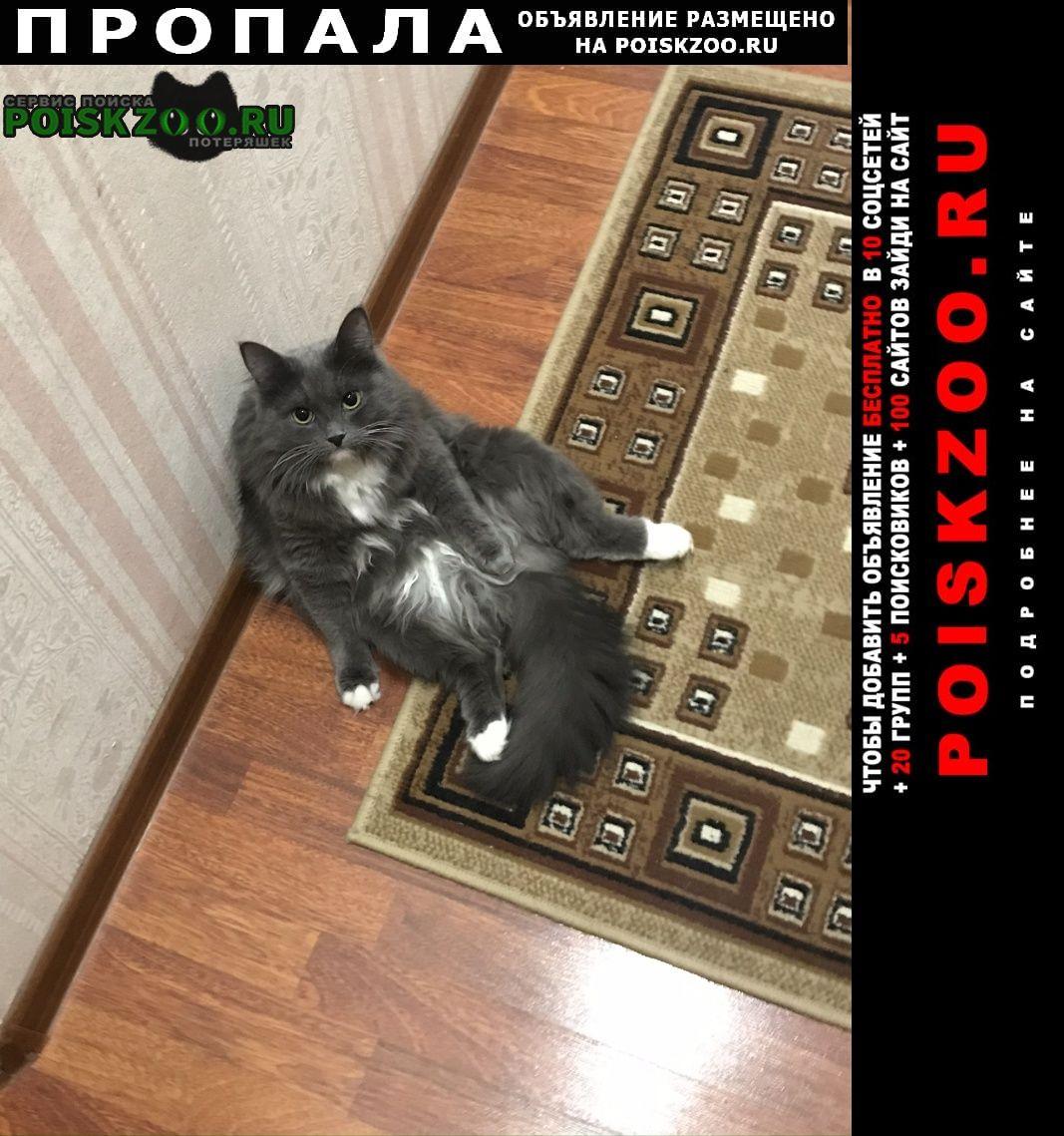 Пропала кошка предлагается вознаграждение Сходня
