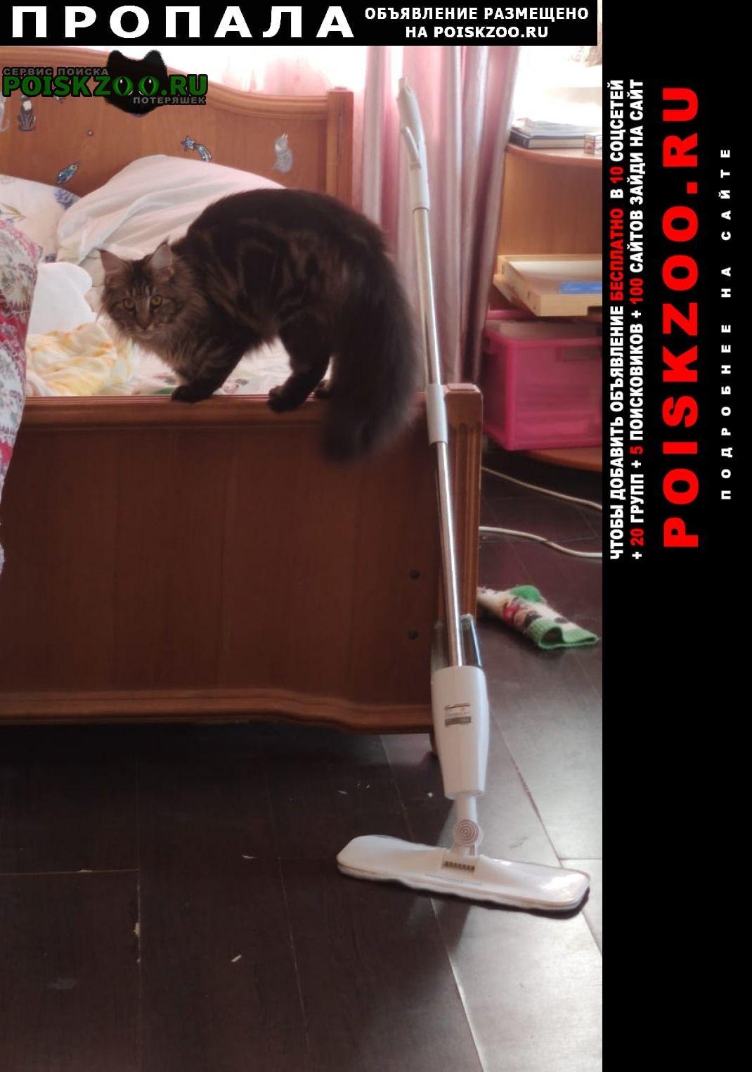 Ростов-на-Дону Пропала кошка