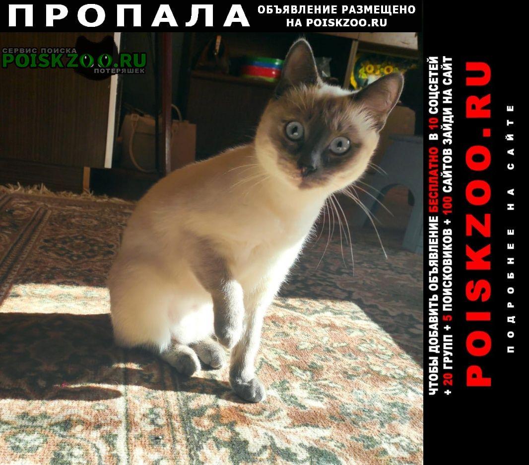 Пропала кошка похожа на сиамскую Серпухов