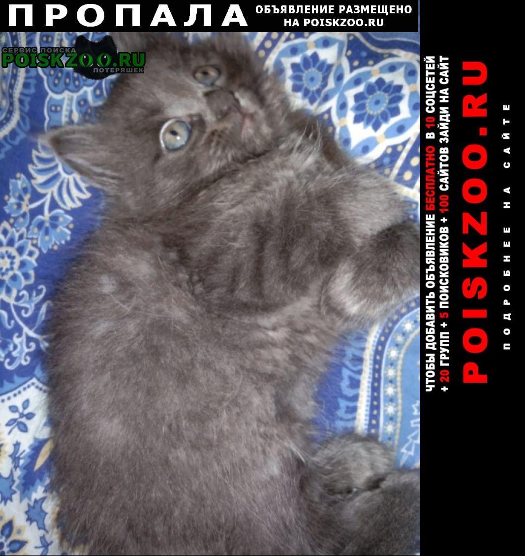 Москва Пропала кошка