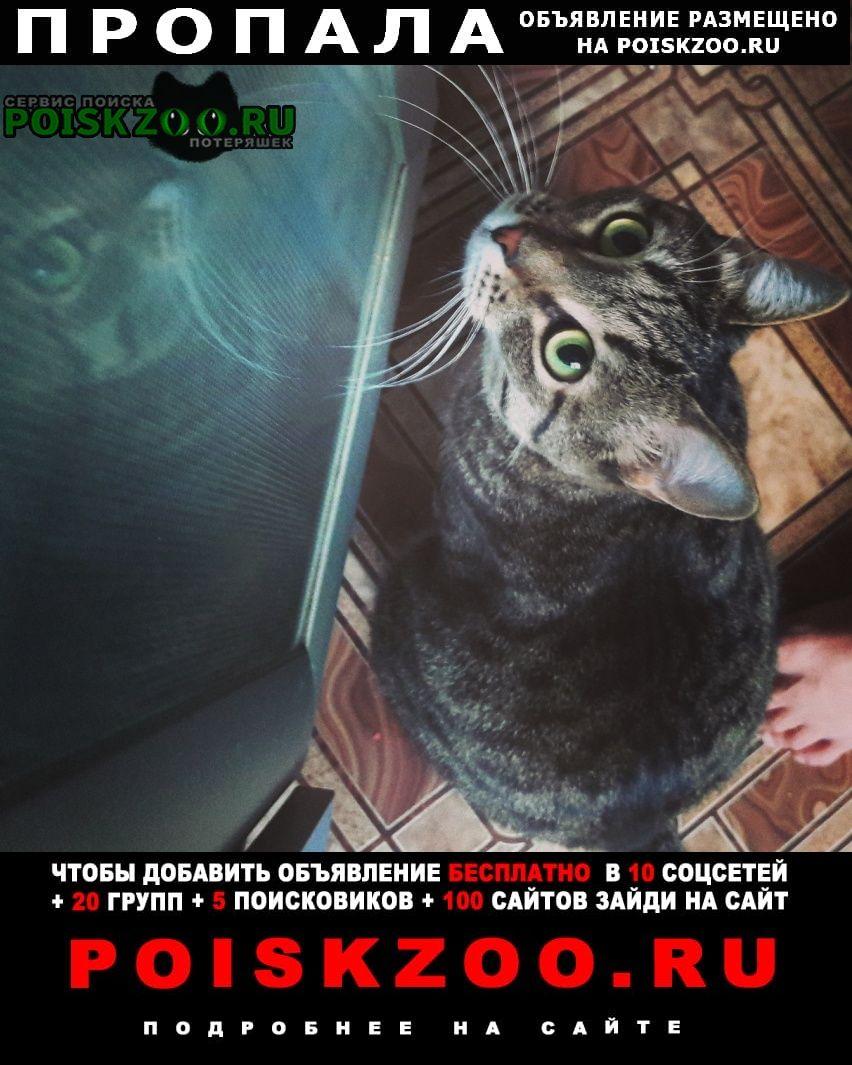 Пропала кошка Самара
