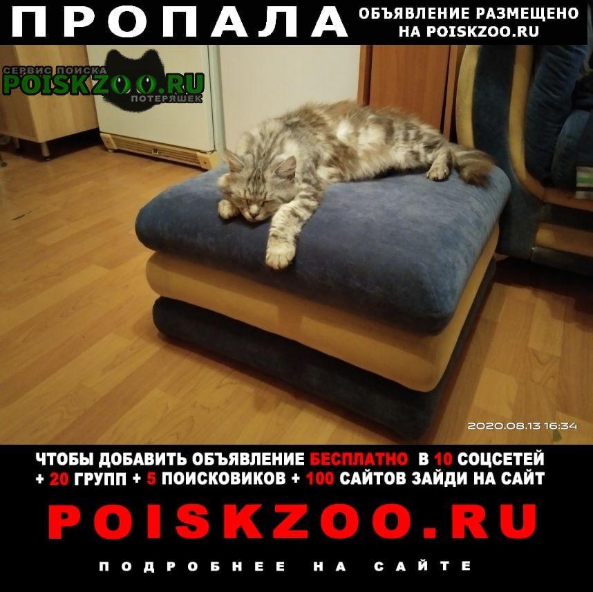 Пропала кошка кот Ростов-на-Дону