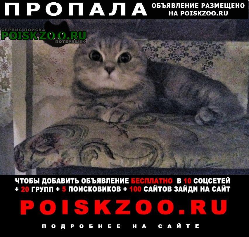 Борисоглебск Пропала кошка