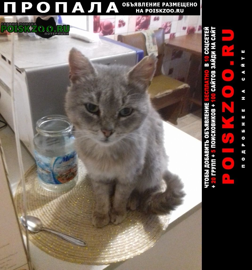 Пропала кошка Подпорожье