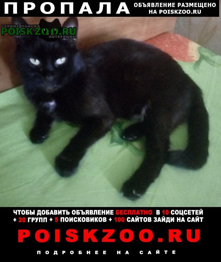 Пропала кошка багира Новороссийск