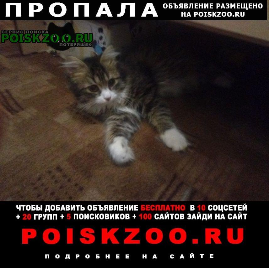 Пропала кошка кот, пушистый, ласковый Омск