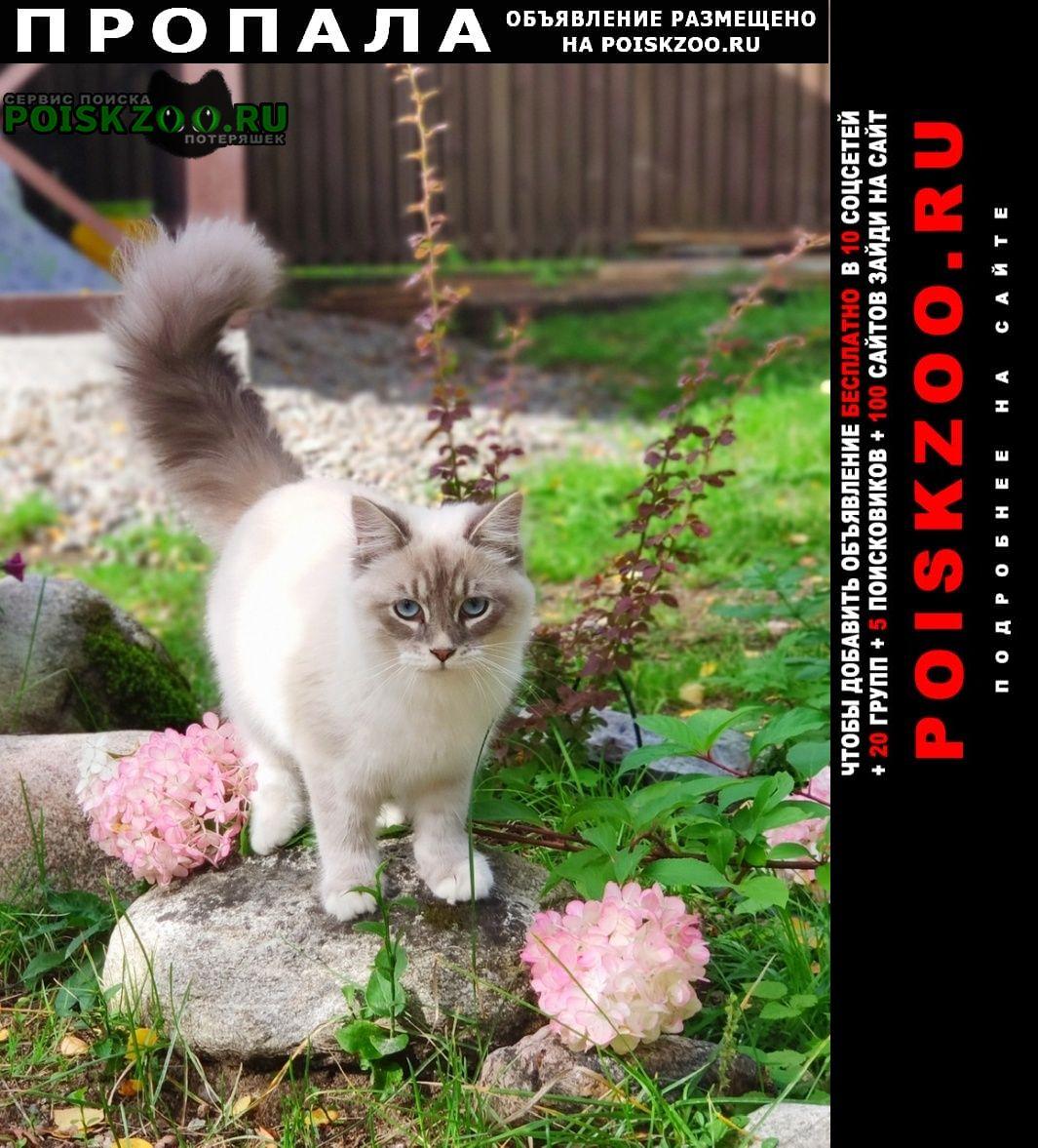 Пропала кошка Приозерск