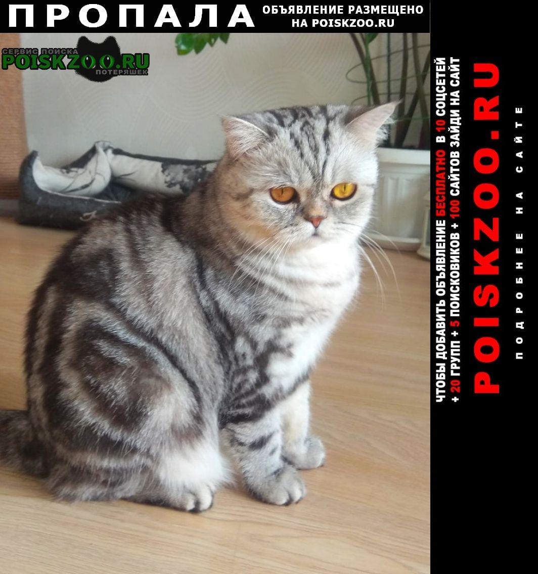 Пропала кошка Пермь