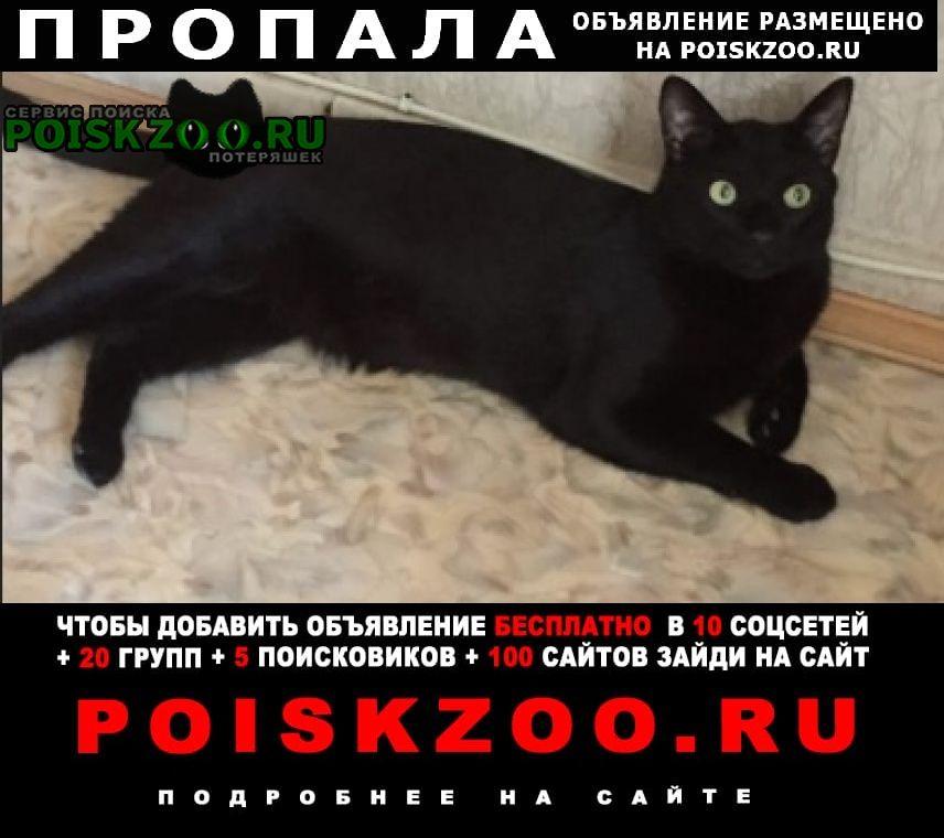 Пропала кошка кот на трассе -петровск Саратов