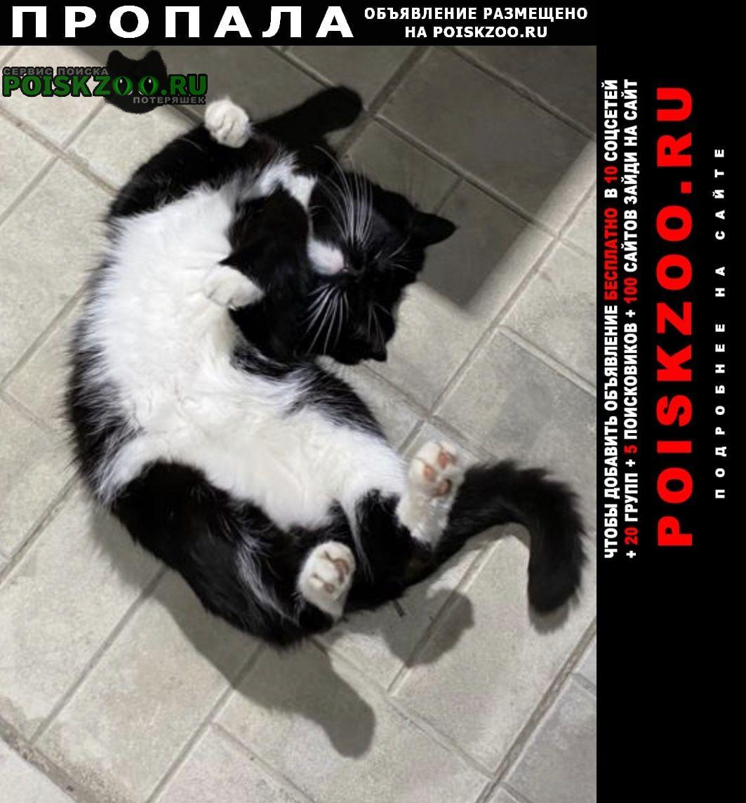 Пропала кошка пожалуйста помогите найти, очень прошу Одинцово