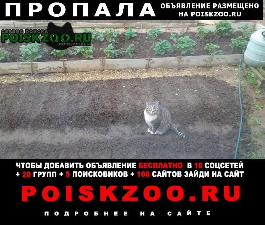 Пропала кошка кот Ижевск