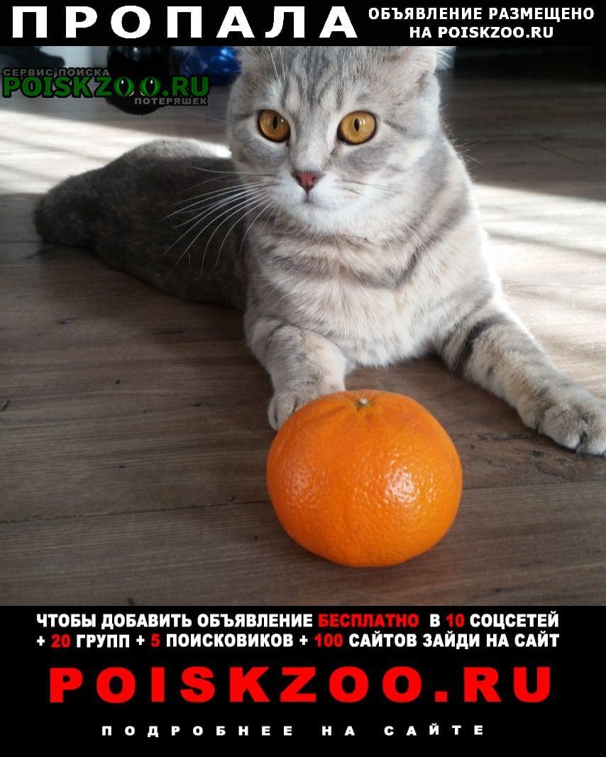 Пропала кошка Чехов