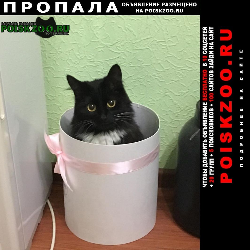 Пропала кошка северное тушино Москва