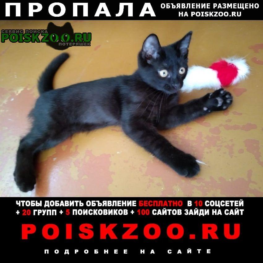 Пропала кошка чёрный молодой кот Электросталь