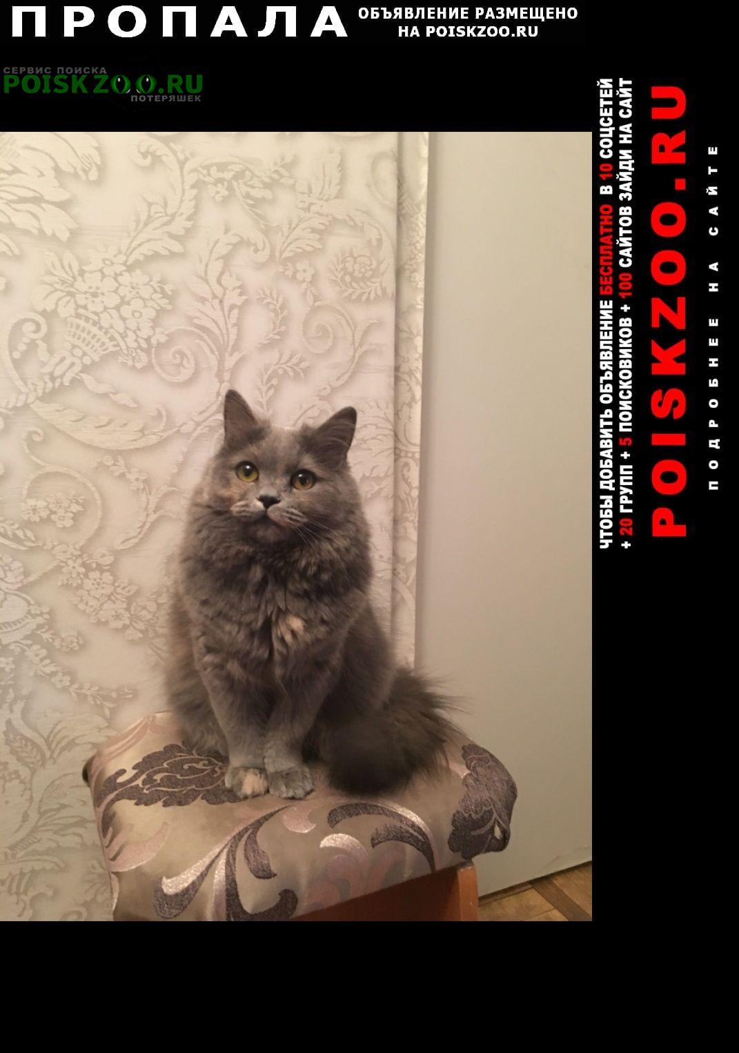 Пропала кошка рощино 5 сентября лен обл выборг Зеленогорск (Ленинградская обл.)
