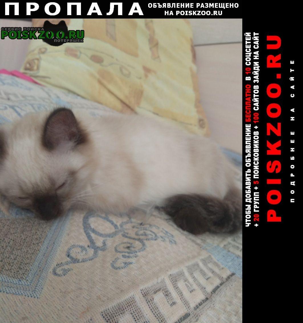 Пропала кошка Магнитогорск