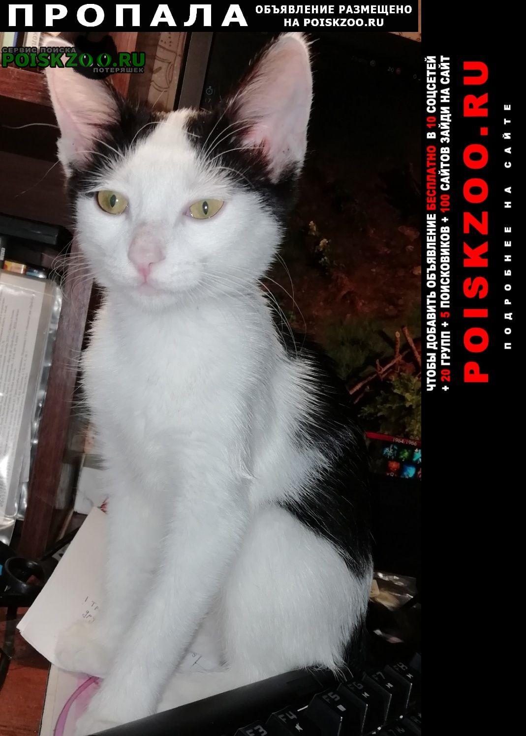 Пропала кошка Таганрог