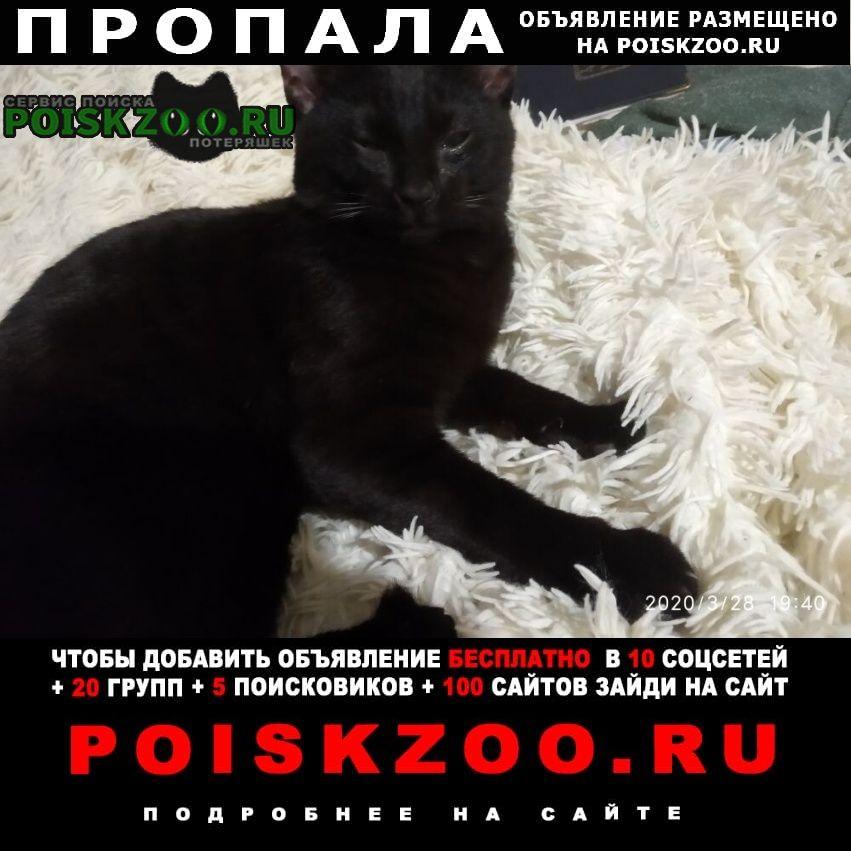 Пропала кошка.. черный кот Безенчук