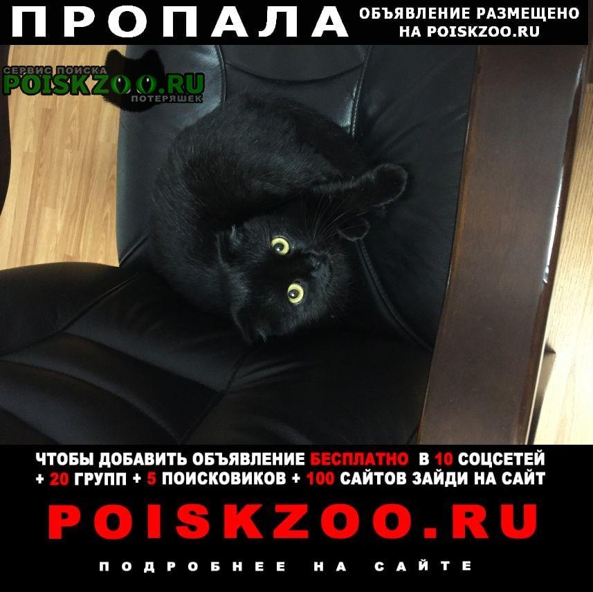 Пропала кошка чёрная вислоухая Краснодар