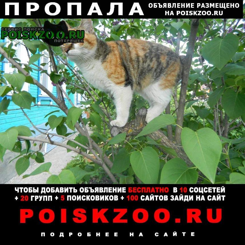 Пропала кошка курильский бобтейл Пенза