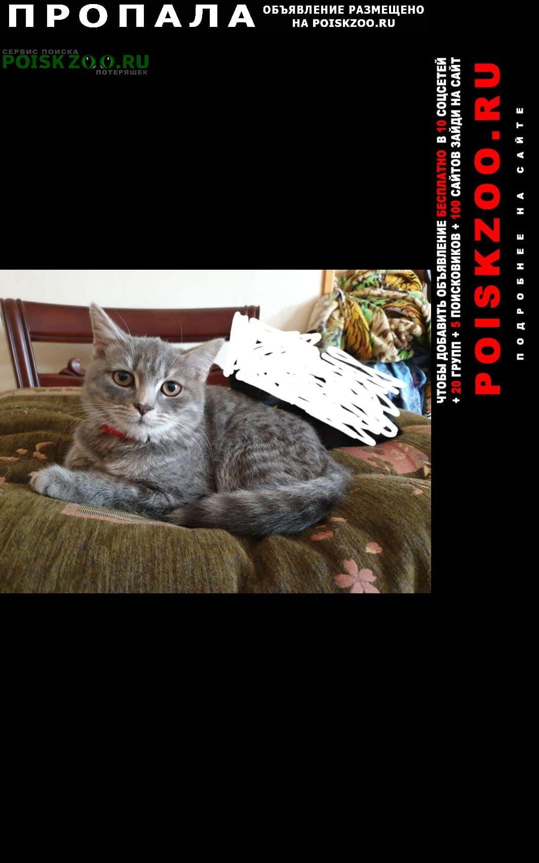 Артем Пропала кошка пушистая серая с розовым ошейником