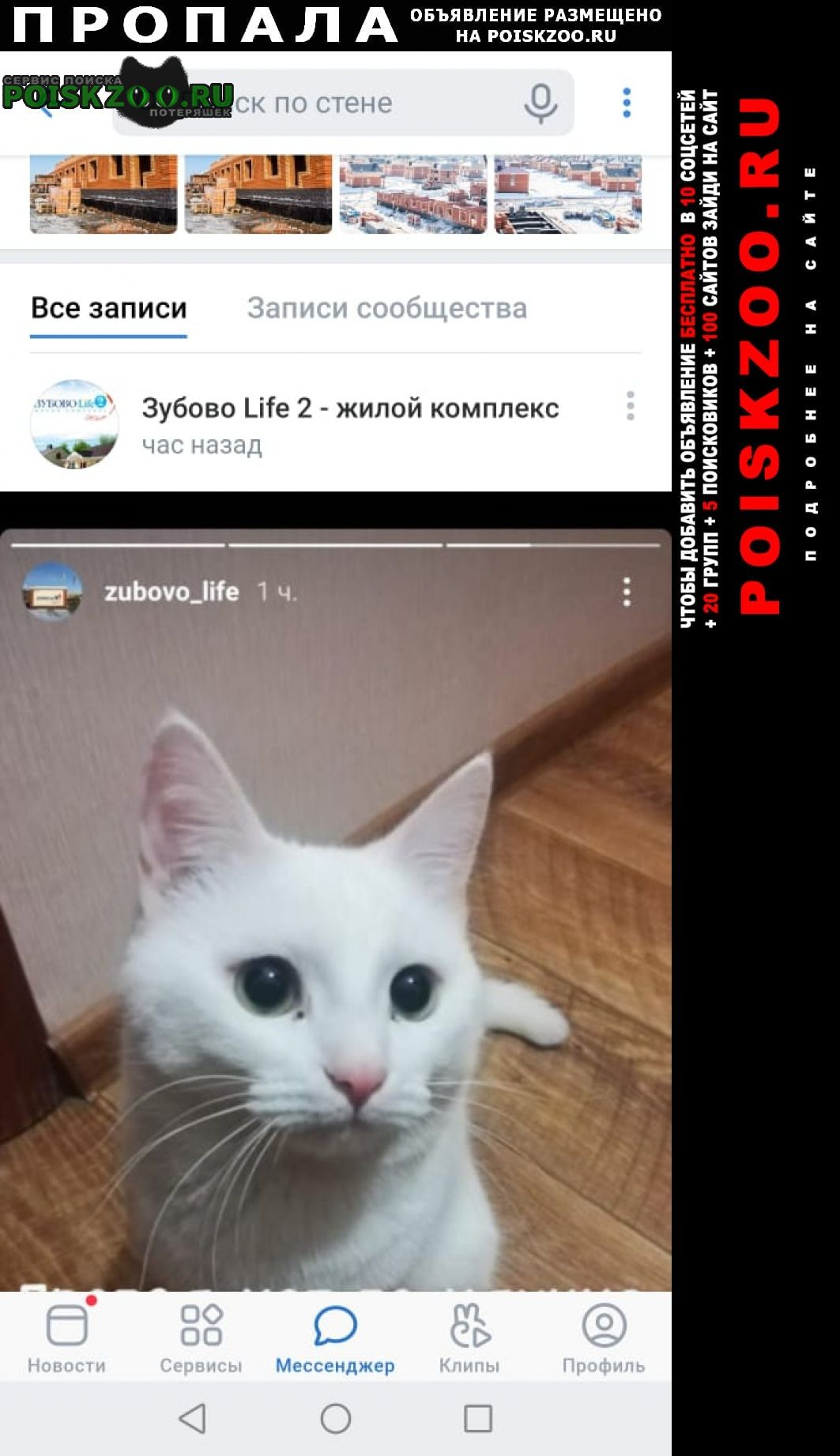 Пропала кошка помогите пожалуйста найти Уфа