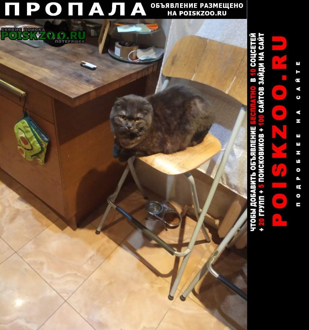 Пушкино Пропала кошка кот тима  помогите